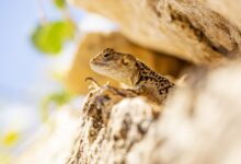 'Littlest reptile on earth' found in Madagascar